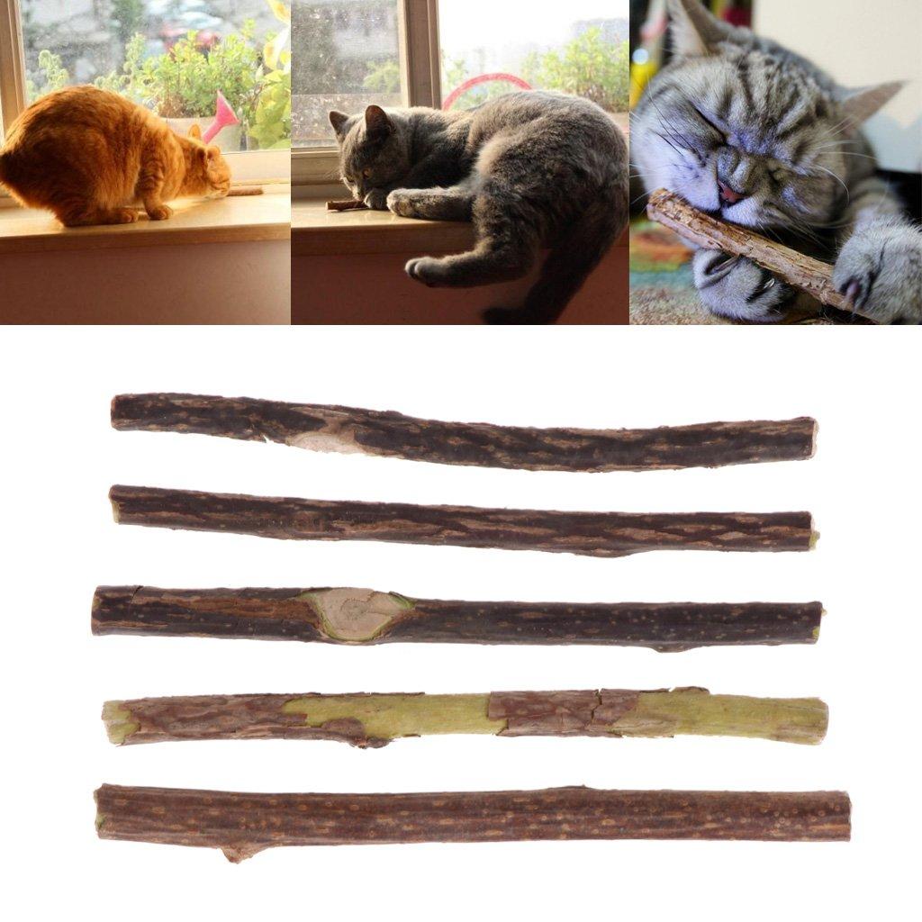 A0127 5 Pezzi di Menta per Gatti Naturale Gatto molare Denti Pulizia Dentale Snack dentifricio Puro