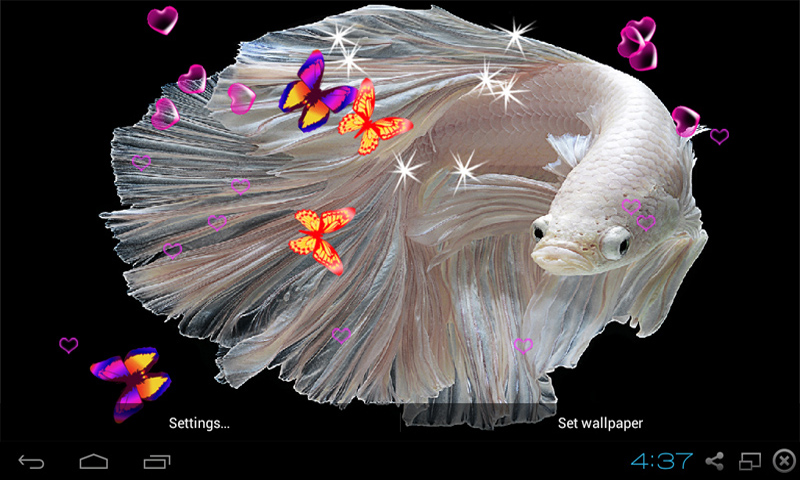 Amazon Betta Fish Live Wallpaper Appstore For Android