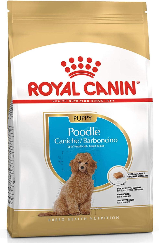 Royal Canin Comida Seca para Cachorros - Caniche, 3 kg