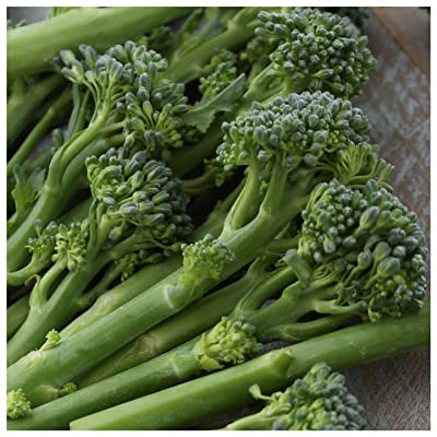 Earthcare Seeds Broccoli Green Sprouting Calabrese 500 Seeds (Brassica oleracea) Non GMO - Heirloom - Open Pollinated : Broccoli Plants : Garden & Outdoor