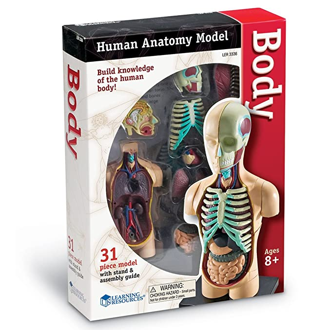 Amazon Learning Resources Human Body Model Toys Games