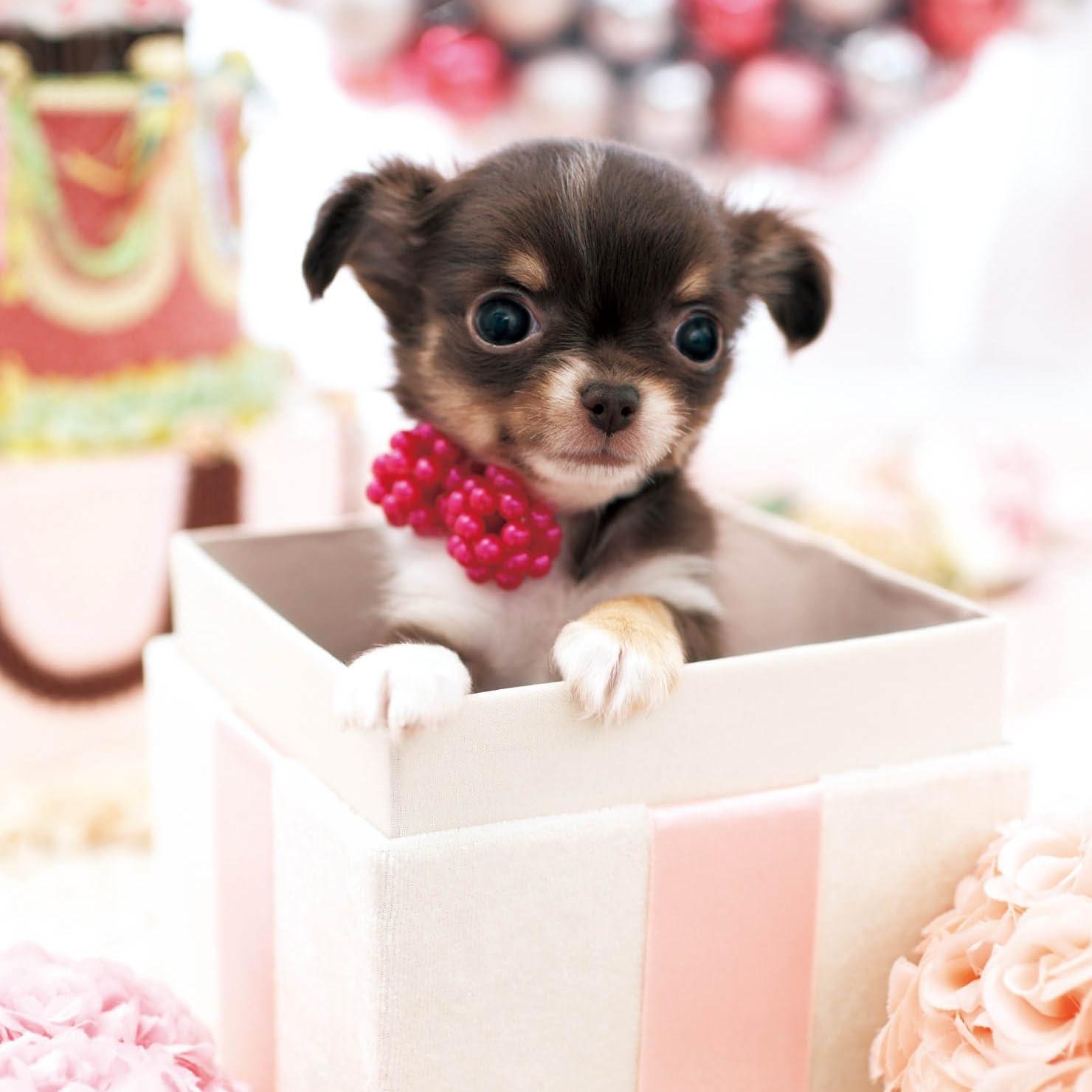 犬 かわいいプレゼント Ipad壁紙 画像61990 スマポ