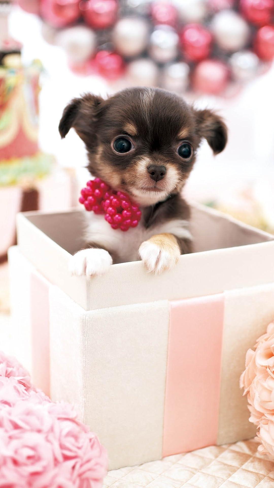 犬 かわいいプレゼント フルhd 1080 1920 スマホ壁紙 待受 画像66290