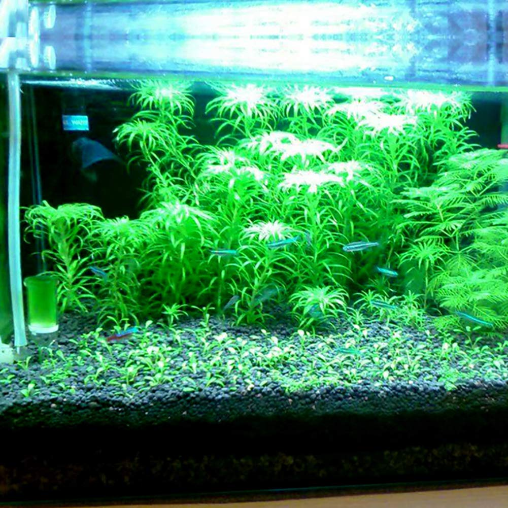 Fd2lb1nvl Aquarium Planted Substrate Sand 1l 3l Balck Soil Fertilizer Mud For Fish Tank Plants Care Freshwater 2 2lb Buy Online In Aruba At Aruba Desertcart Com Productid 143776624