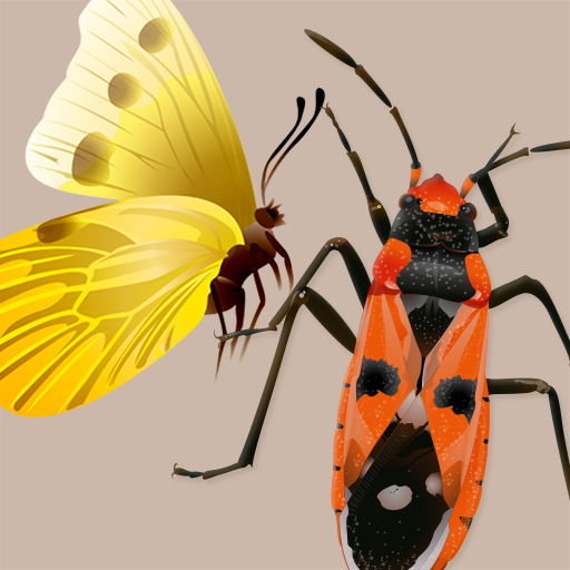 Identifier Key - Key to Insect Orders