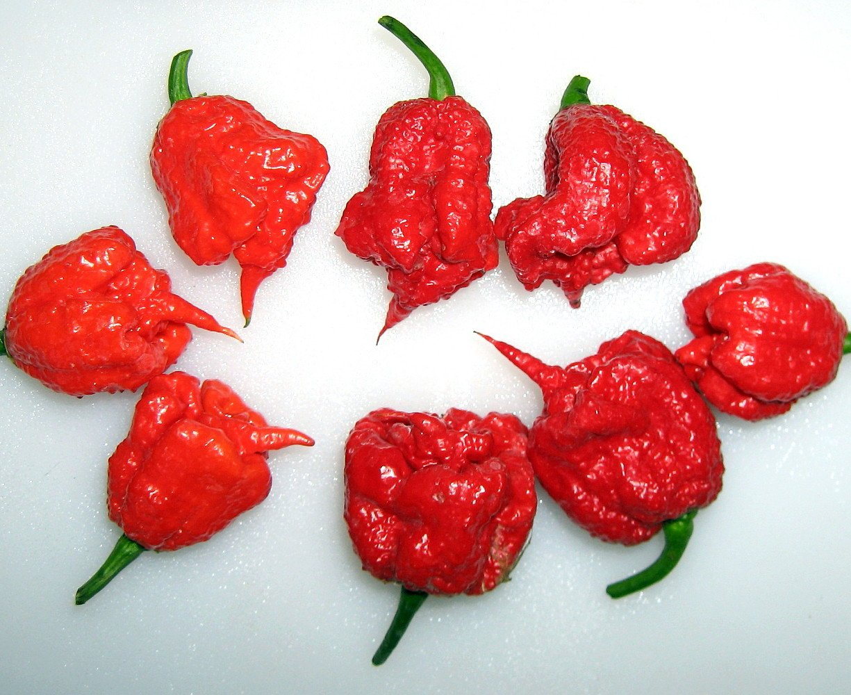 Carolina Reaper Pepper - 4 Live Plants - World's Hottest Pepper -Fear the Reaper by Hirts: Pepper (Image #3)