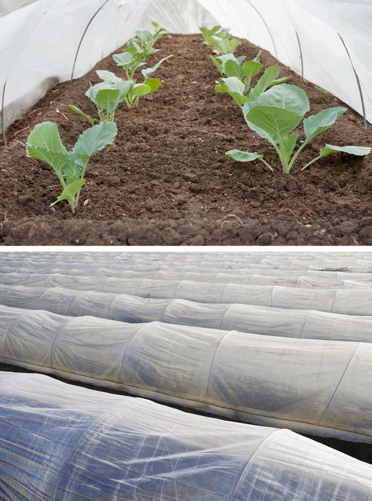 Thermovlies M850 Pro Garten-Vlies zur Pflanzenabdeckung sehr stabil ...