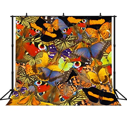 Amazoncom Fh 10x10 Animal Backdrop Colorful Butterfly