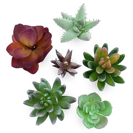 Amazon Com Artificial Succulent Plants 6 Piece Assorted Set For