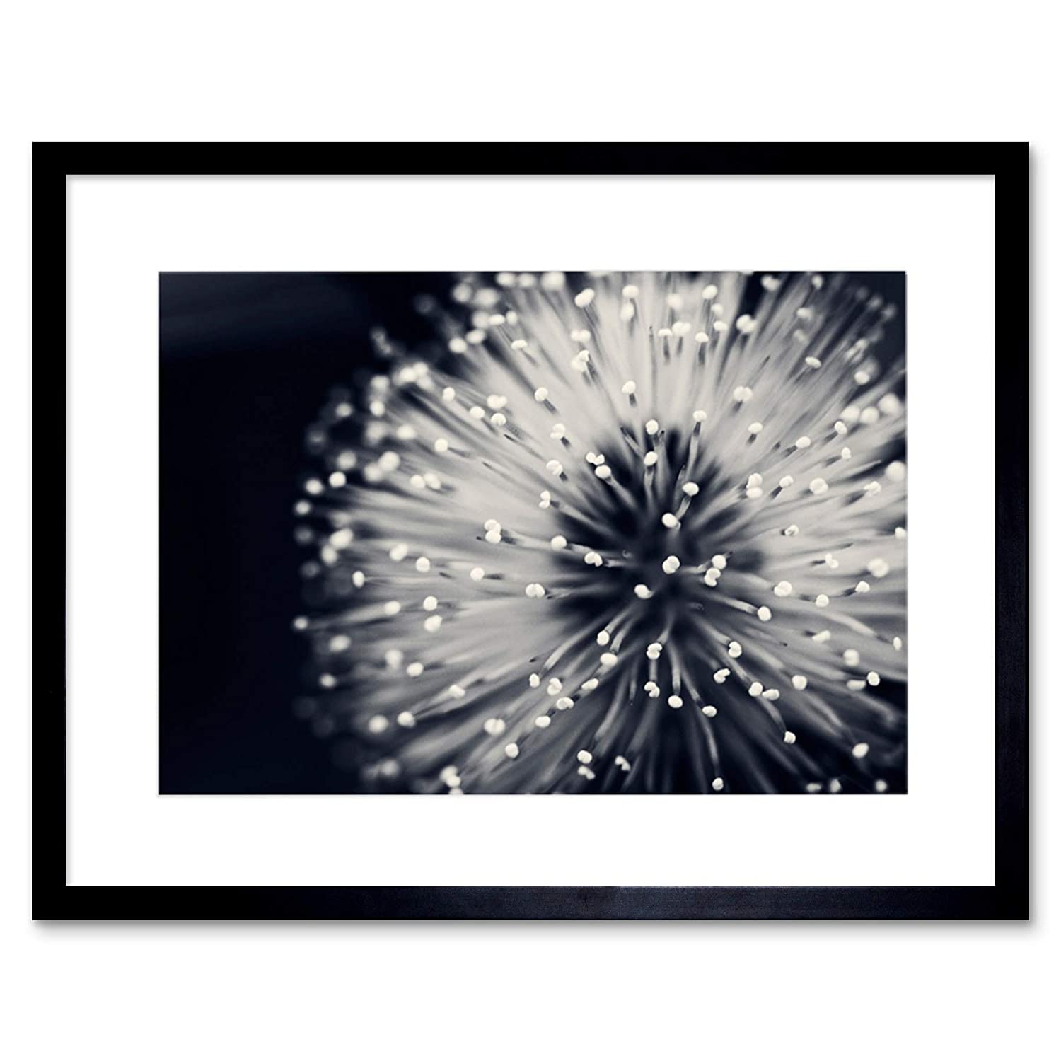 Amazon com the art stop photo nature plant flower black white beautiful home framed print f12x4247 posters prints