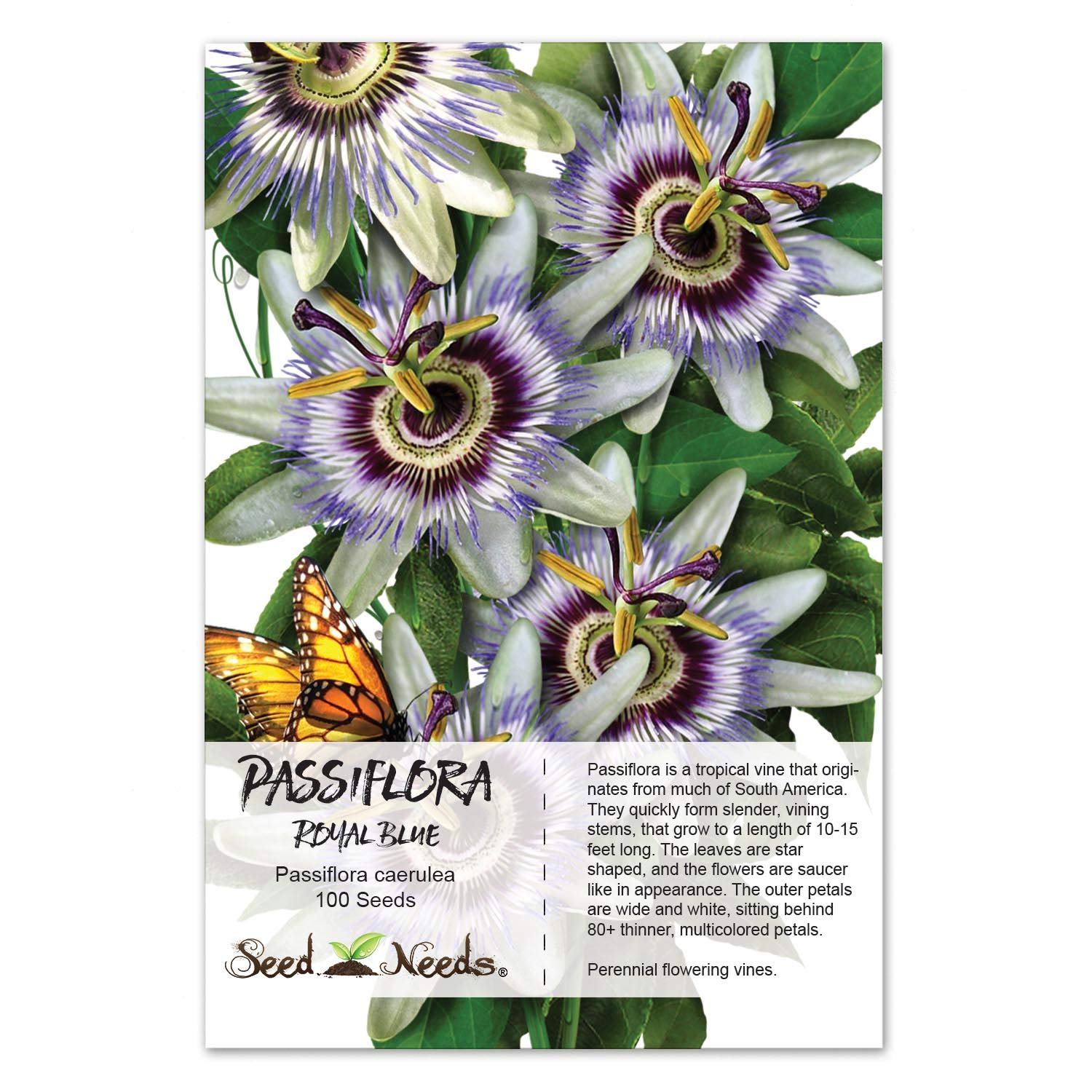 Amazon Package Of 100 Seeds Royal Blue Passion Flower