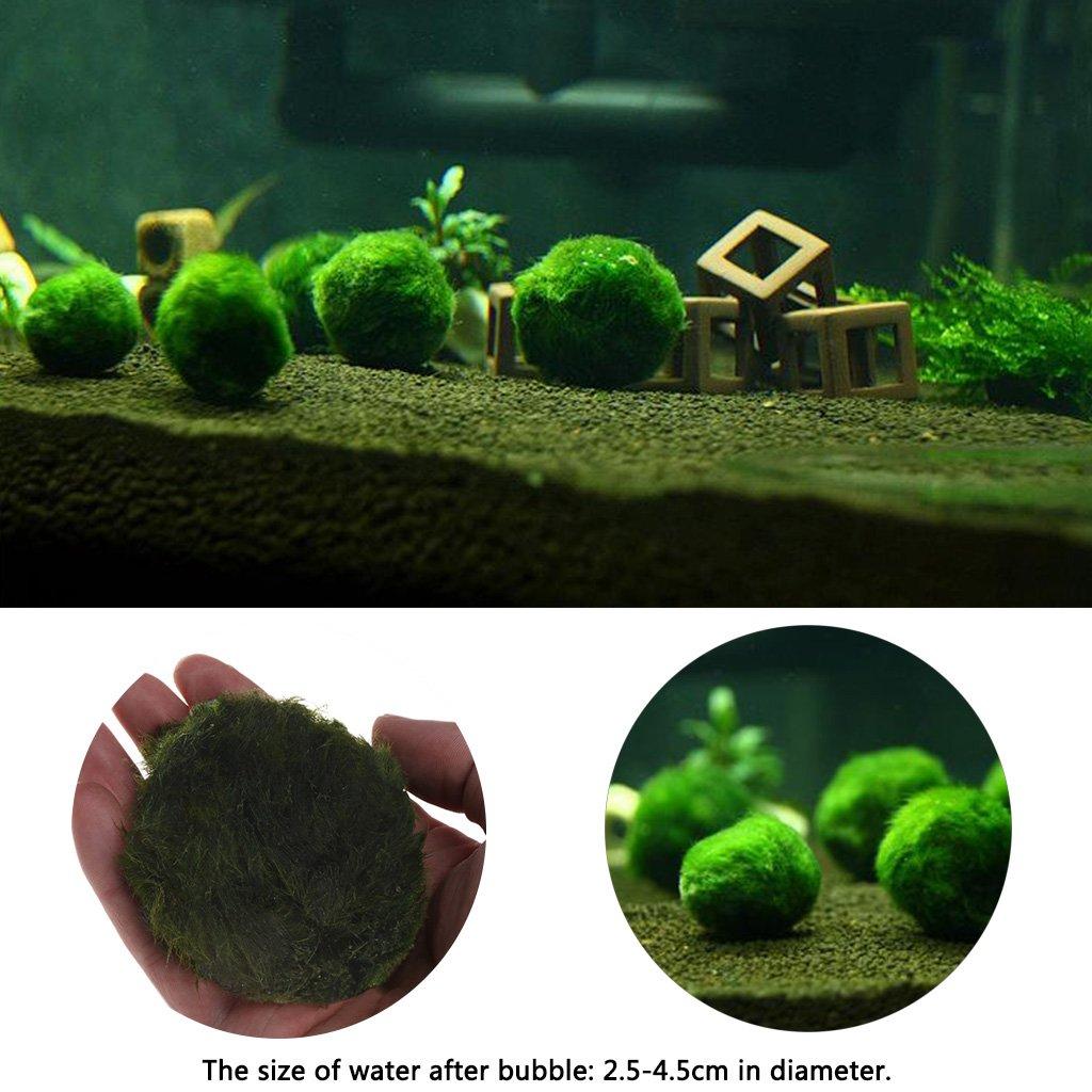 Kofun Boule de Mousse Artificielle réservoir de Poissons Aquarium Decor Ornement Plantes Naturelles Diamètre: 2.5cm-4.5cm (0.98in-1.77in)