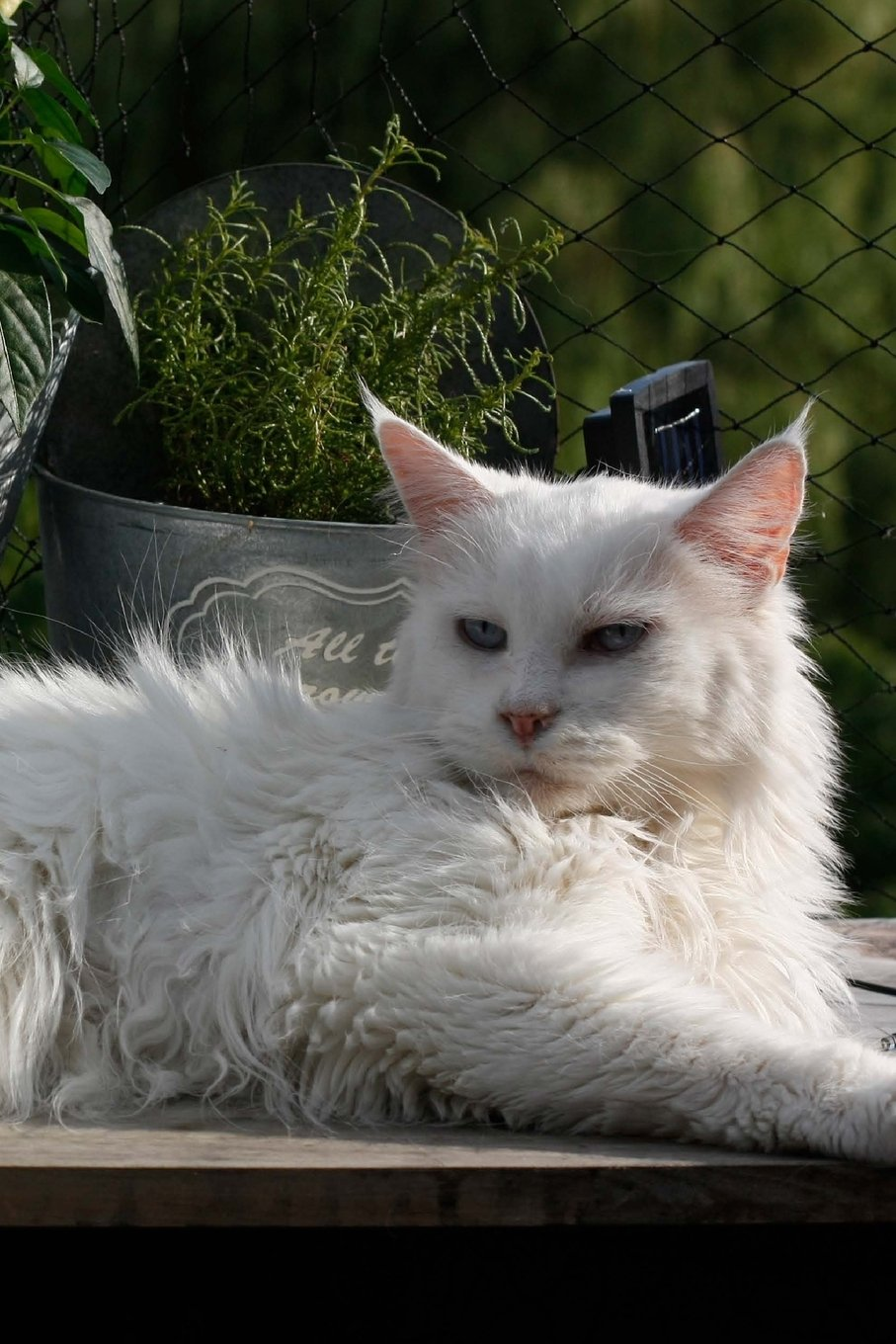 Download Fluffy White Cat in the Garden: 150 page lined 6 x 9 notebook/diary/journal pdf epub