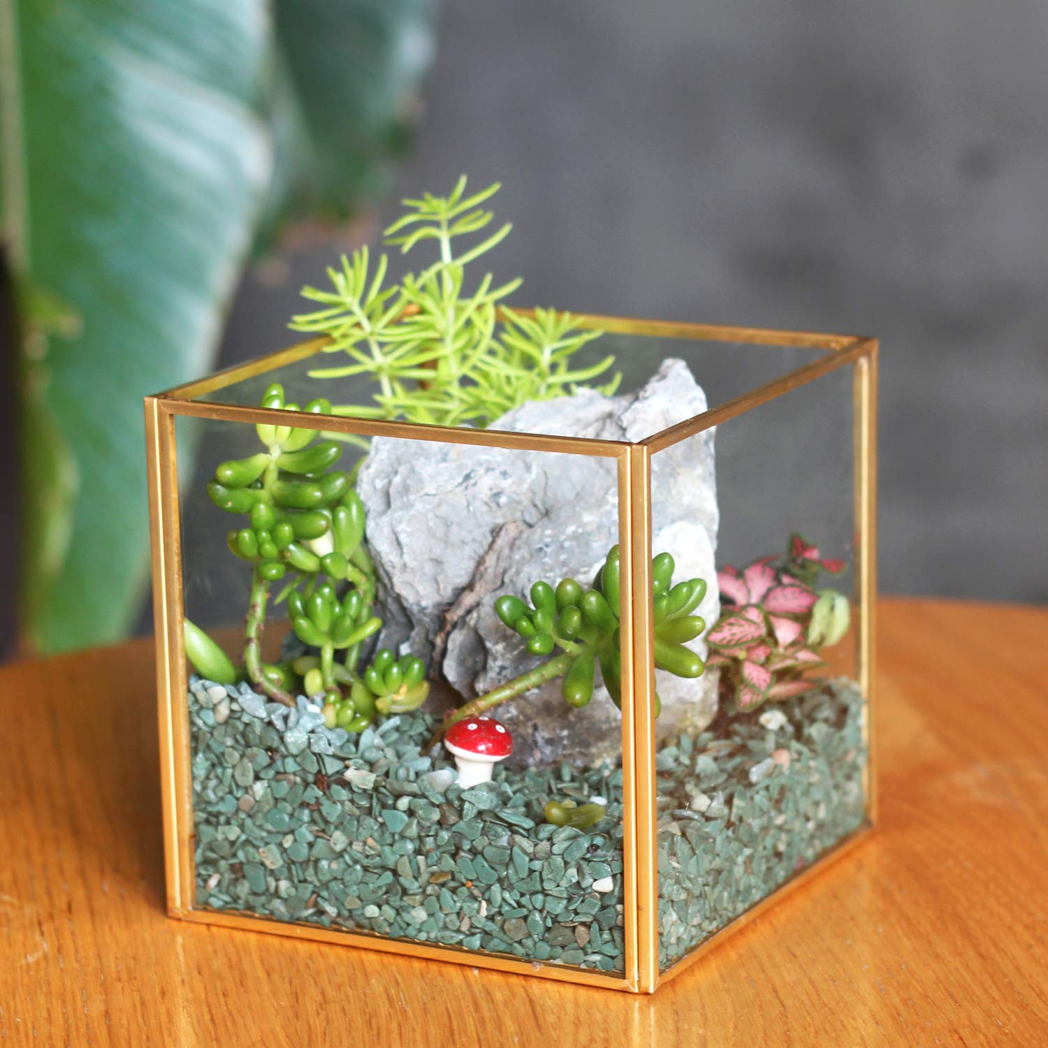 Kimdio Geometric Decorative Terrarium Cube Inclined Clear Glass Planter Tabletop Black Small Air Plant Holder Display Box Succulent Moss Flower Pot Containers DIY Centerpiece -5 inch