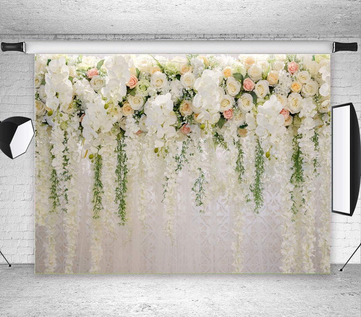 Art Studio 3d Weiße Rose Blumen Fotografie Hintergründe Kamera