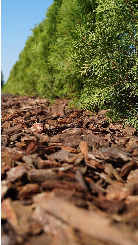 80 l de Madera de Corteza de astillado paisajismo jardín Superficie Mulch Play Area Flor Seguridad: Amazon.es: Jardín