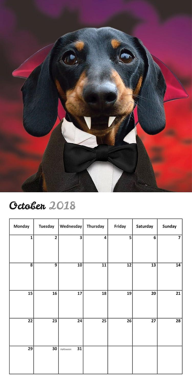 Divertido calendario de pared 2018 de perro salchicha: Amazon.es ...