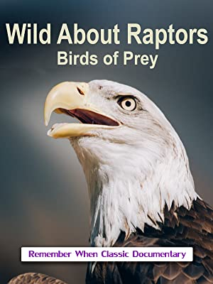 Watch Wild About Raptors Birds Of Prey Prime Video