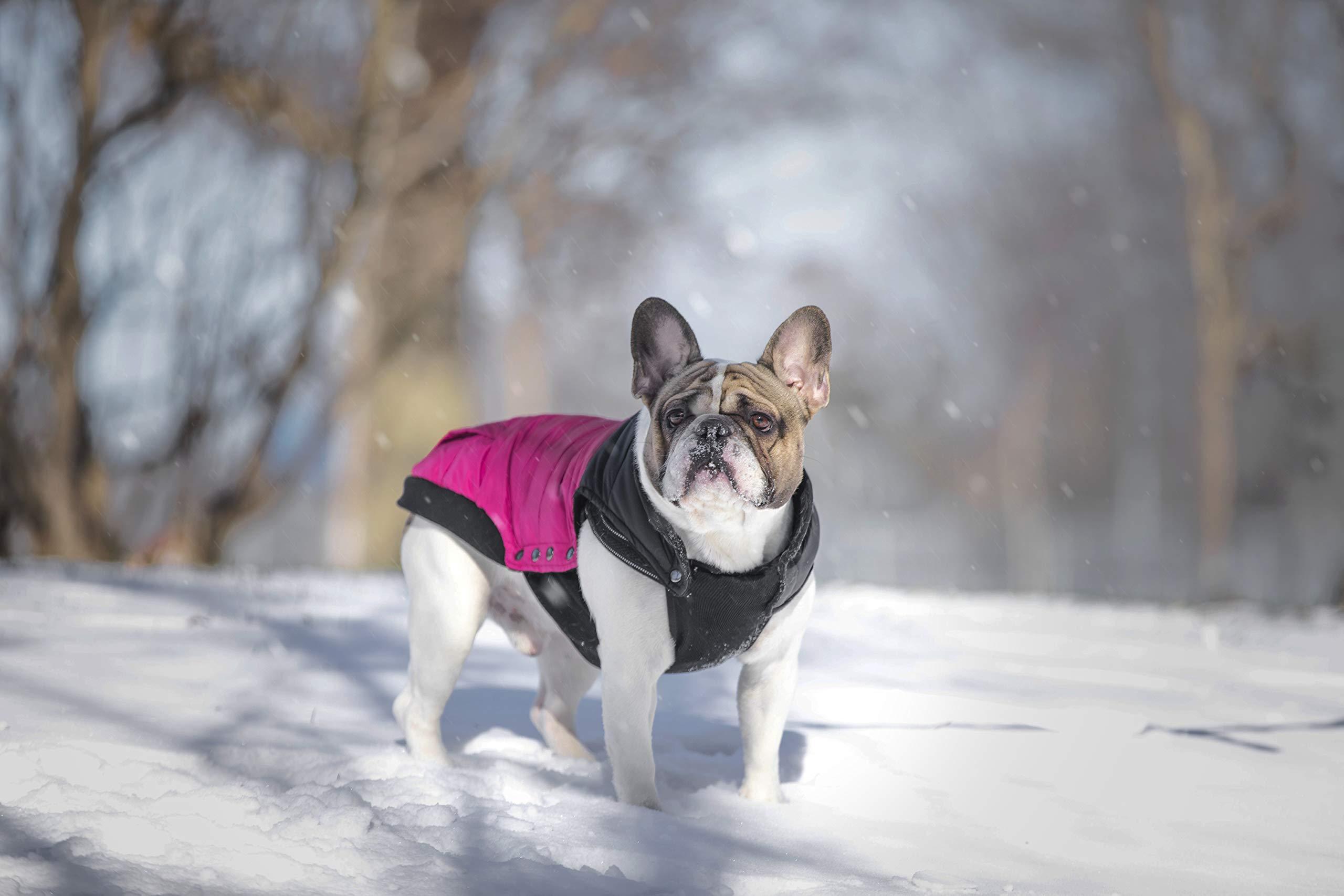 Canada Pooch Summit Stretch Puffer Dog Vest, Plum, Size 18