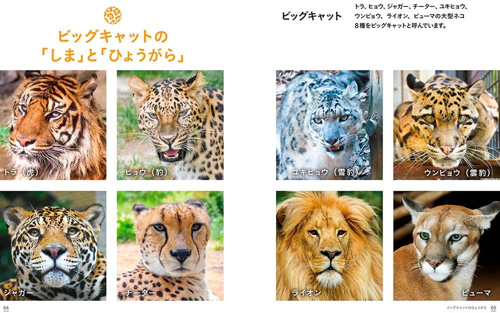 ヒョウ 違い ジャガー