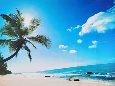7x5ft,sxy293 Levoo Beach Palm Tree Blue Sky Summer Background Banner Photography Studio Birthday Family Party Holiday Celebration Romantic Wedding Photography Backdrop Home Decoration