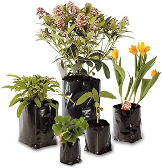 Nutleys Lot de 100 Pots de Fleurs /