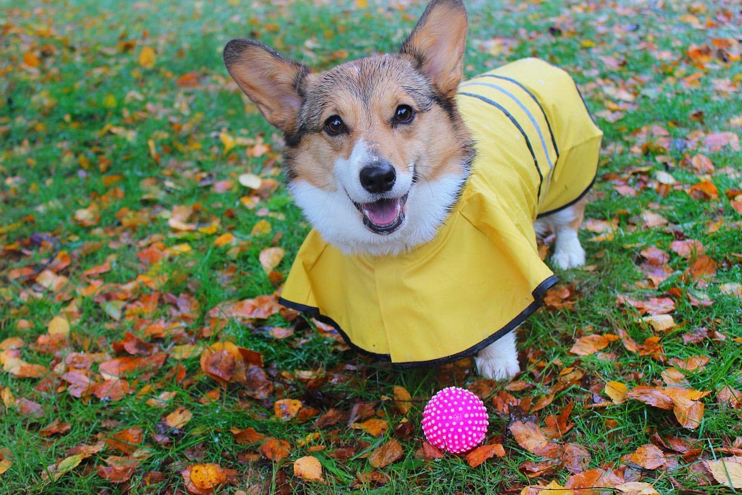 WarmHeaven Cute Dog Hooded Rain Poncho Adjustable and Reflective for Small Medium Large Puppy Breed Yellow Neck:16.5'' Length:18.9''