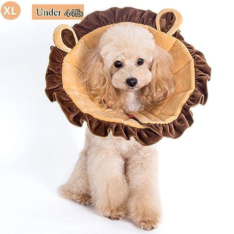 Amazon.com: AITOO Collar de recuperación para perros y gatos ...