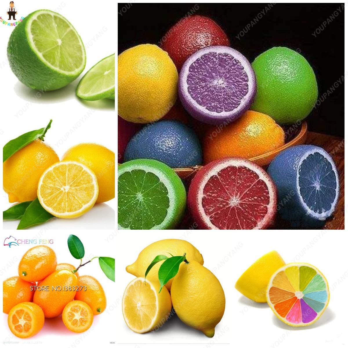 AGROBITS 20Pcs Japanese Rainbow Lemon Bonsai Dwarf Lime Tea Fruit Plants Garden Organic Citrus Limon Tree Semillas de Fruta Pink