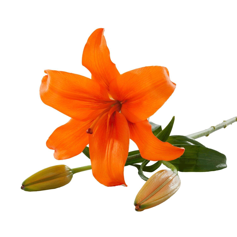 Asiatic Lilies   Orange - 40 Stem Count by Flower Farm Shop
