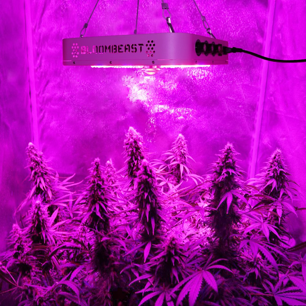 LED Grow Light Full Spectrum for Indoor Plants Veg and Flower Dimmable COB Growing Lamps for Marijuana BloomBeast A520 520w 13 Band with UV IR 3 Dimmers hydroponics lighting(5 Years Warranty) by BloomBeast (Image #2)