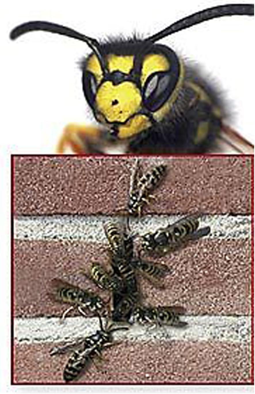 Bienenbeisser 50 mm Fugenl/üfter Sto/ßfugenl/üfter rostfrei Edelstahll 300 St/ück