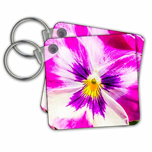 Amazon alexis photography flowers pansy pink and white alexis photography flowers pansy pink and white pansy flower macro key chains mightylinksfo