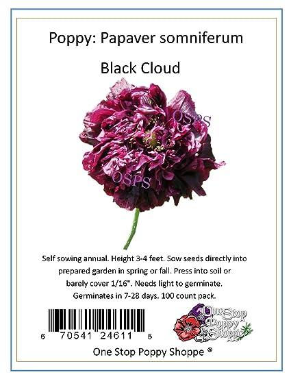 Amazon 100 poppy flower seeds black cloud papaver somniferum 100 poppy flower seeds quotblack cloudquot papaver somniferum stop poppy shoppe mightylinksfo