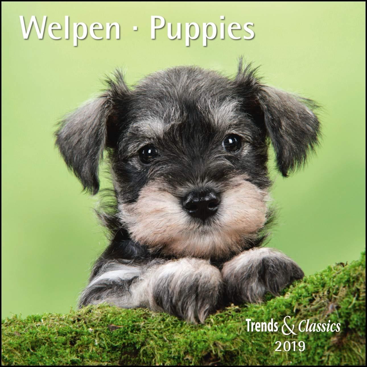 Welpen Puppies 2019   Broschürenkalender   Wandkalender   Mit Herausnehmbarem Poster   Format 30 X 30 Cm
