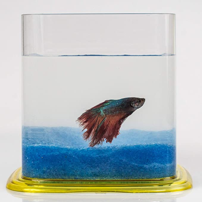 Aquariaglass Arena de Vidrio Azul para decoración de acuarios 2 kg Cristal: Amazon.es: Productos para mascotas