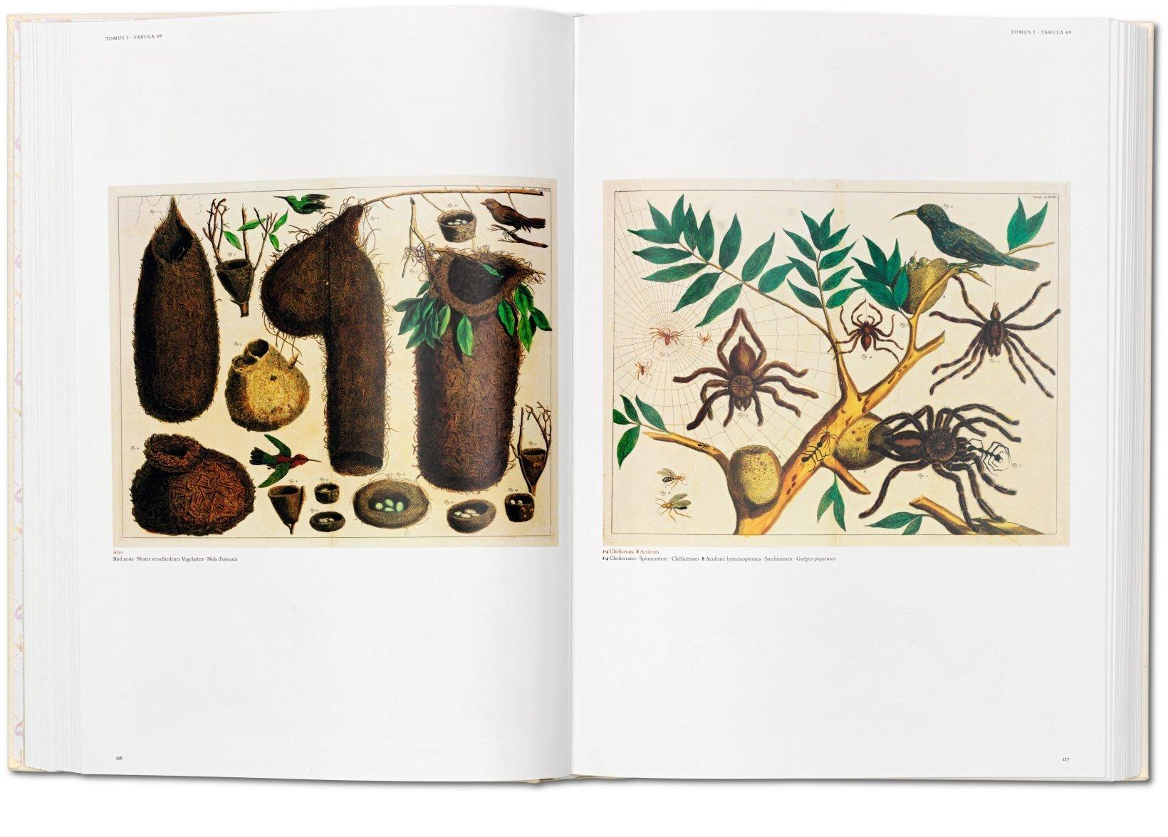 Seba: Cabinet Of Natural Curiosities: Albertus Seba, Rainer Willmann, Jes  Rust, Volker Wissemann: 9783836515832: Amazon.com: Books