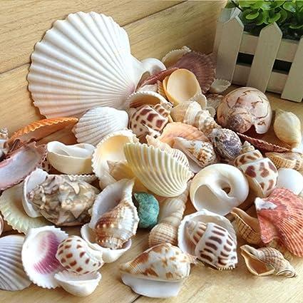 200g / pack Shell natural de la playa y concha SeaShells Acuario Fish Tank Landscaping Decoration
