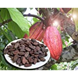 Whole Cacao (Cocoa) Beans, 2 Lb, Fresh, Organic, Fermented, From an Organic Family Farm in the Dominican Republic.