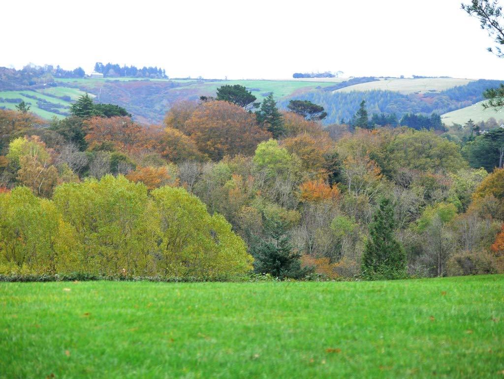 Lais Jigsaw Autumn Ireland trees 2000 pieces