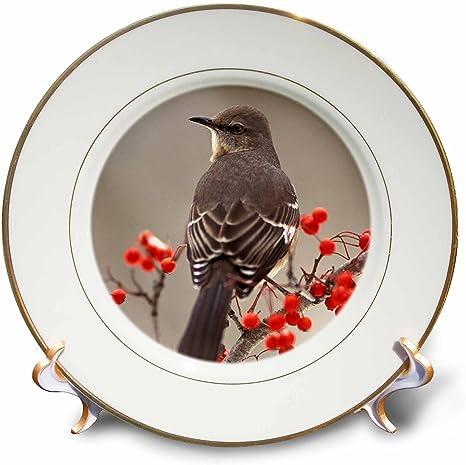 3drose Cp 83556 1 Mockingbird Among Hawthorn Berries Na02 Aje0227 Adam Jones Porcelain Plate 8 Inch Amazon Co Uk Kitchen Home