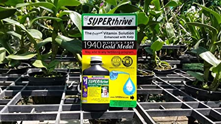 Amazon.com: Superthrive Plant Vitamin and Hormone | for Root ...