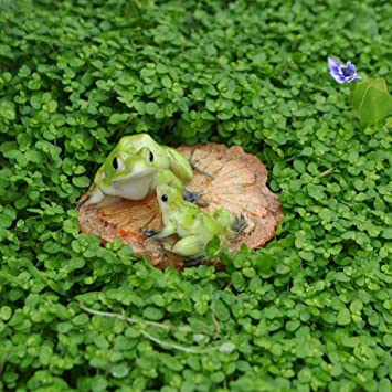 Miniature Fairy Garden Frogs On A Wood Chip