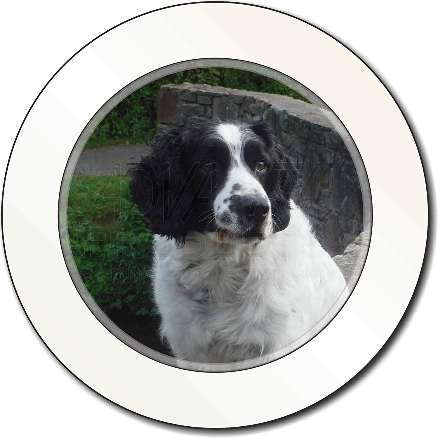 Advanta Group Springer Spaniel Puppy Dog Car//Van Permit Holder//Tax Disc Gift