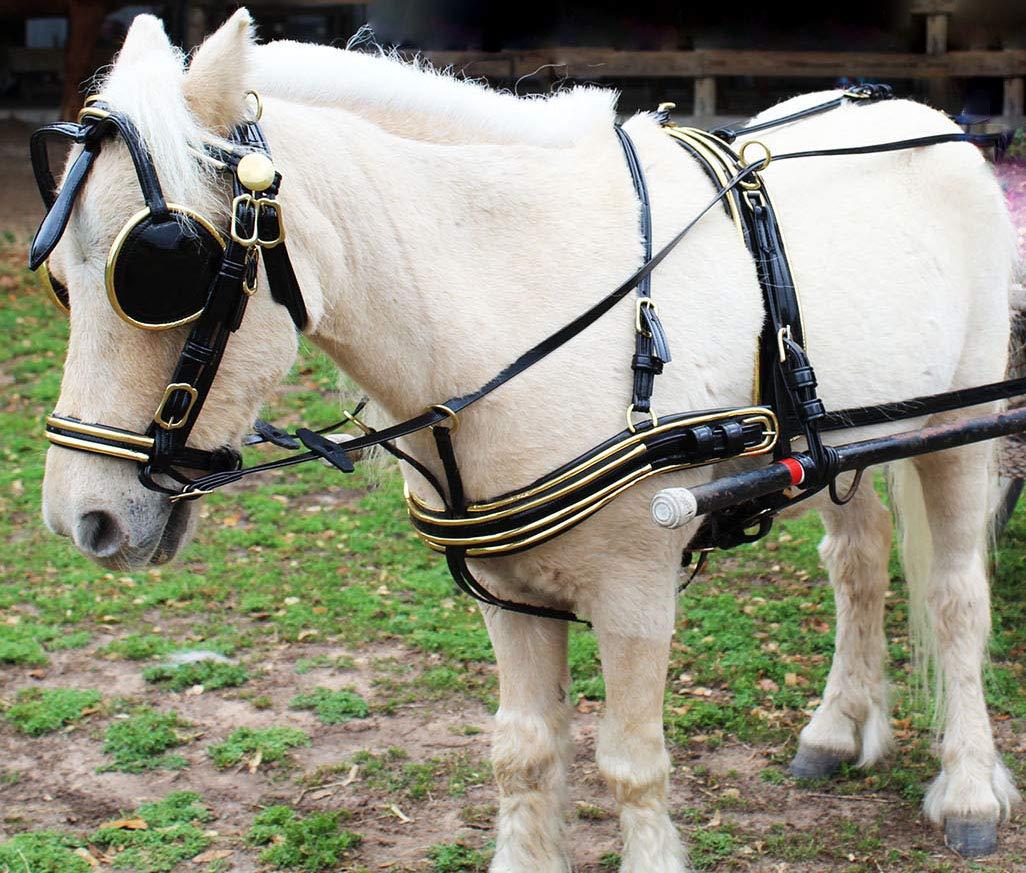 ProRider 10601-03 - Arnés de piel con diseño de caballo occidental ...