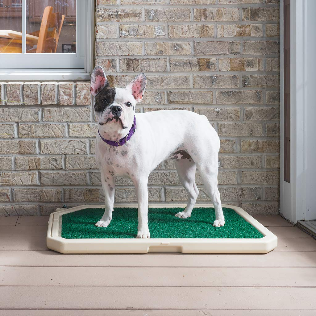 PetSafe Piddle Place Indoor/Outdoor Dog Potty, Alternative to Puppy Pads, Indoor Restroom for Dogs by PetSafe