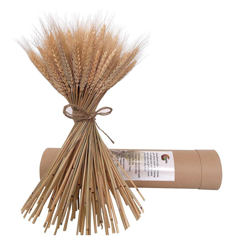 自然乾燥小麦Bunches Flowes forウェディングセンターピース装飾100 Stems B07DN9VBBS