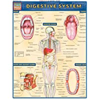 Digestive System (Quick Study Academic)