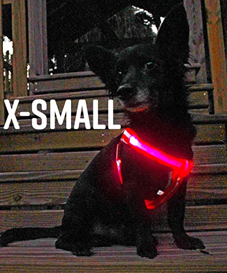 SAFA Arnés para Perro LED sin Tirar, USB Recargable al Aire Libre ...