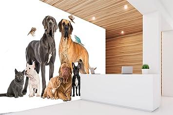 Fotomural Vinilo Pared Perros razas | Fotomural paredes | Vinilo Decorativo | Mural | Papel Pintado | 100 x 70 cm | Veterinarios | Decoración comedores, ...